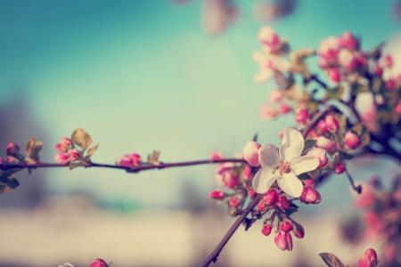 Wiosna Słoneczka i Misie